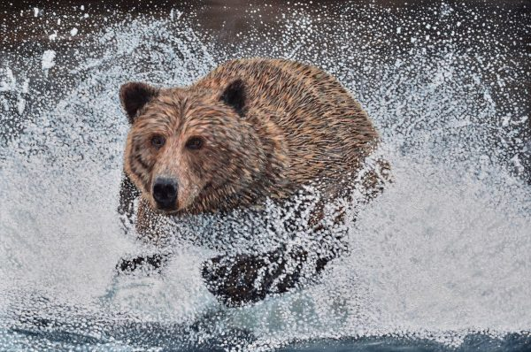 Acrylic painting of a Grizzly Bear running in the water by the Canadian artist Brian Sloan